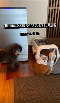 Ematoro11020